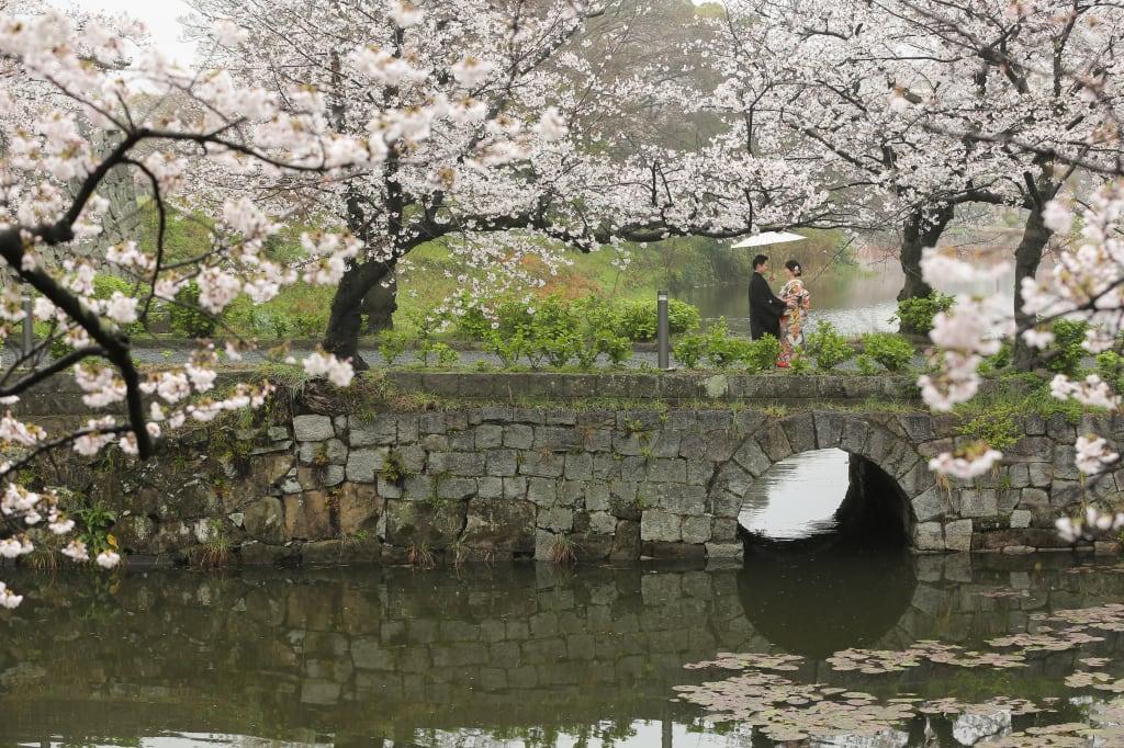 満開の桜を独り占め!