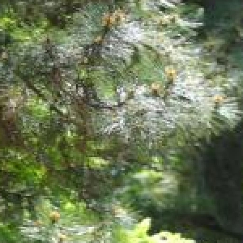 新緑の三渓園