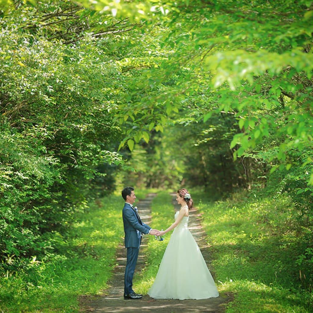8月9月森と緑のオススメロケーション撮影