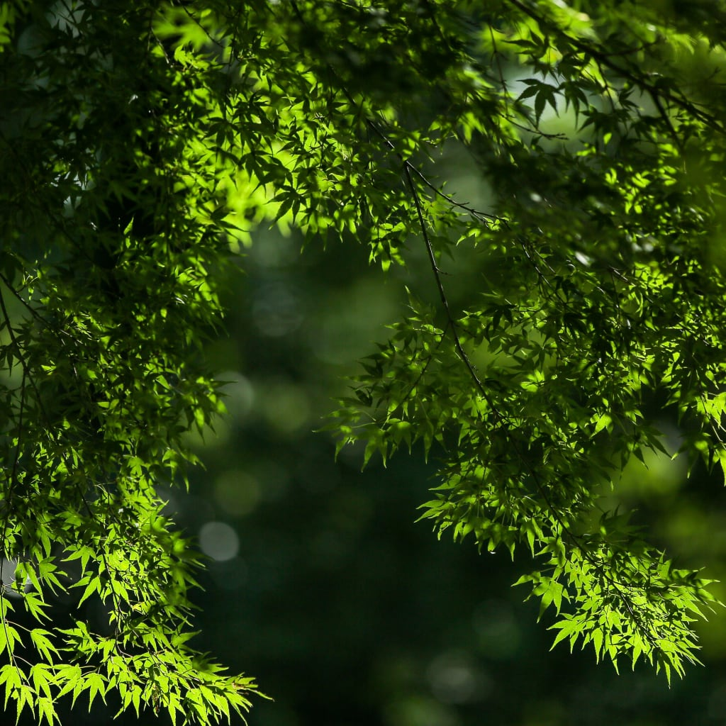 新緑のロケーション地