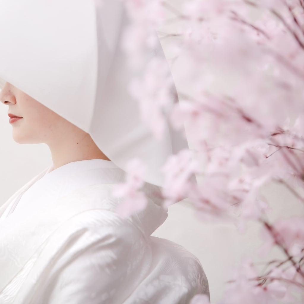 スタジオで撮る桜