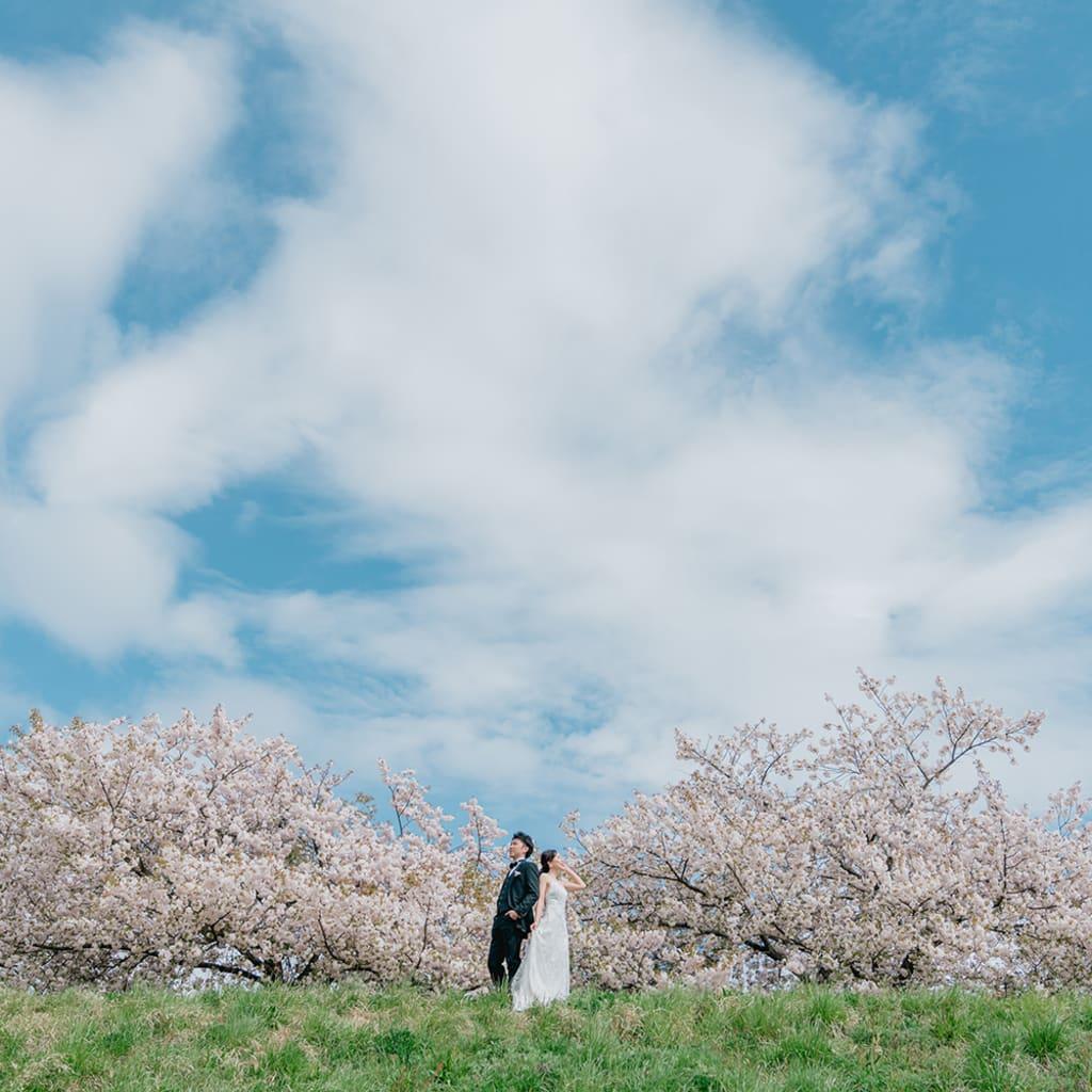 小布施の八重桜