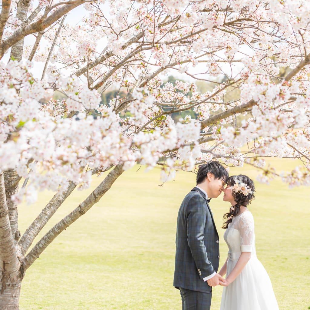 軽井沢桜シーズン