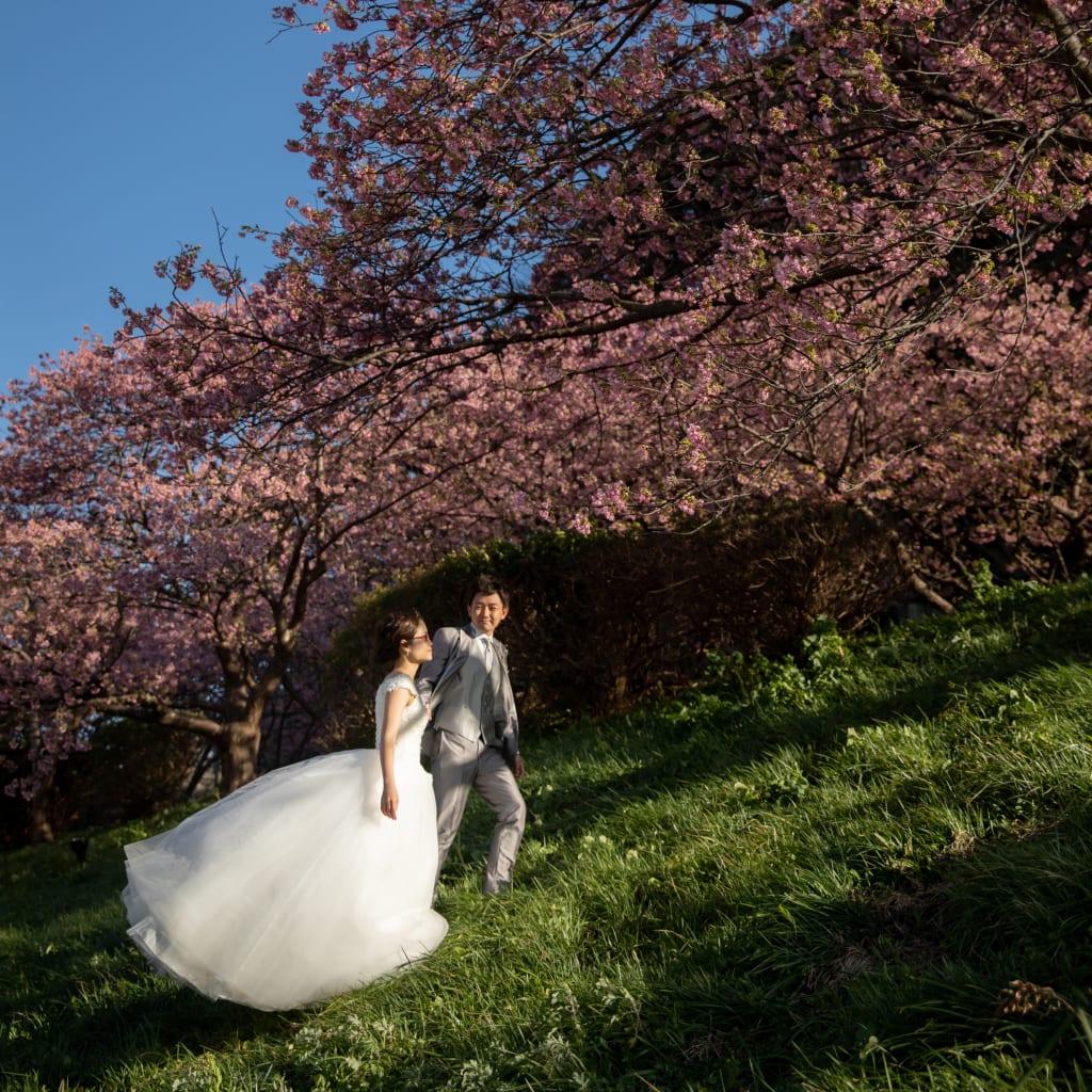 ついに桜の開花宣言* 桜といっぱい撮りませんか?