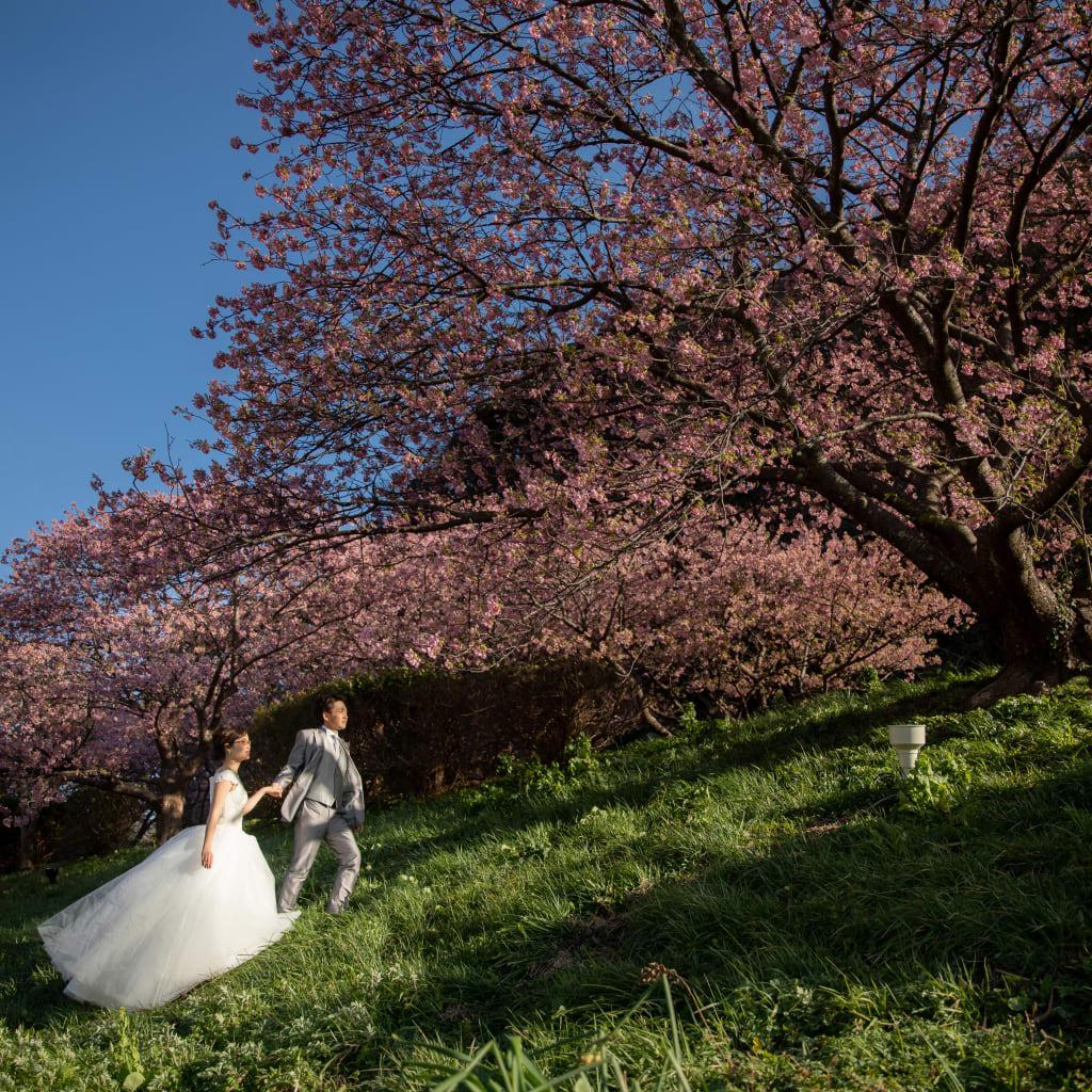 ついに桜開花宣言* お花ロケーション撮影がおすすめ!