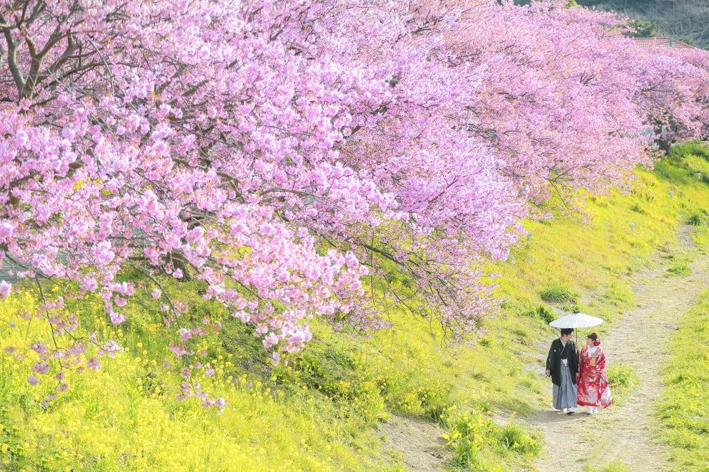 春おすすめ