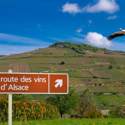 Alsace - vin, öl och sagolika byar