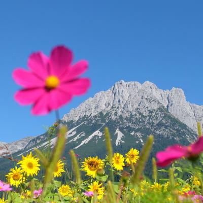 Vandring i Tyrolen - flyg