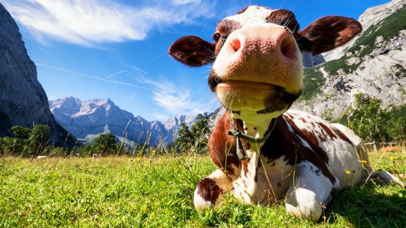 Lata dagar i Tyrolen