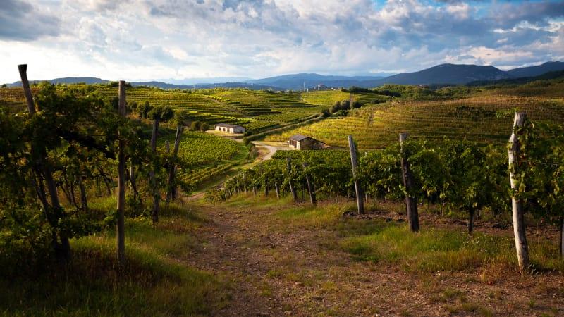 Lipica hingstfarm & vinprovning i natursköna Vipavadalen