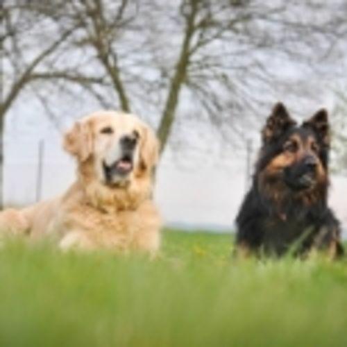Výcvik psů Třebíč