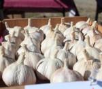 Pocono_Garlic_Festival