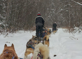 Dogsledding at Ogopogo Resort.