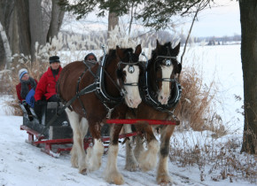 Sleigh ride at Elmhirst's Resort.