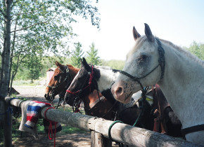Horses at Trailhead Ranch.