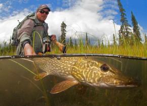 Northern pike fishing at Alaska Trophy Adventures Lodge.