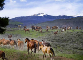 Horses at C Lazy U Ranch.