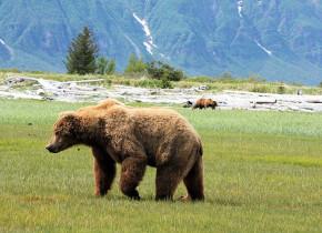 Bear at Bear Paw Adventure.