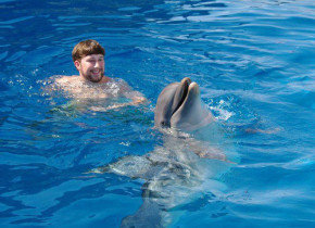 Swimming with the Dolphins at The Boardwalk Beach Resort