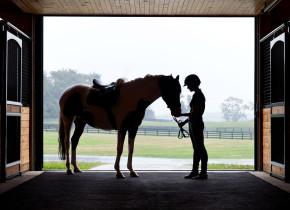 Horses at Salamander Resort & Spa.
