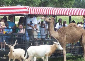 Safari at The Exotic Resort Zoo.