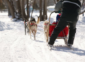 Dog sledding at Fern Resort.