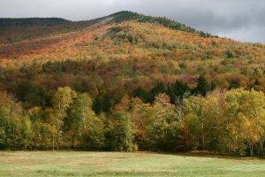 View of fall leaves on the hills at The Red Clover Inn Restaurant & Tavern.