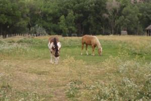 Ponies at Arrowhead Bed & Breakfast.