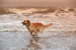 Pets welcome at Elliott Beach Rentals.