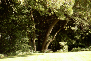 The grounds at Stahlecker House Bed & Breakfast.
