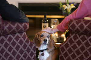 Pets welcome at Saybrook Point Inn & Spa.