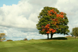 Golf course near Northern Quarters Management.