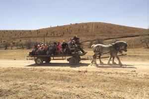 Horse wagon rides at Cibolo Creek Ranch.
