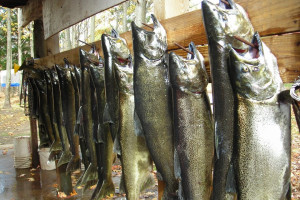 Fish Cleaning at Fox Hollow Lodge