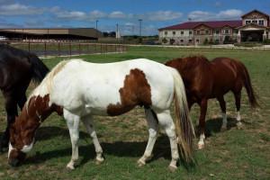 Horses at The Inn at Circle T.