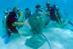 Diving at Cobalt Coast Resort.