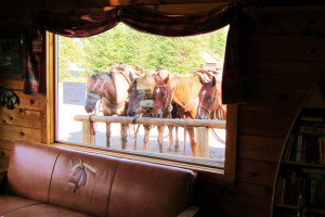 Horses at Trappers Lake Lodge & Resort.