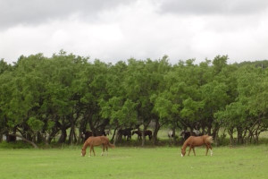 Horses at Silver Spur Ranch.