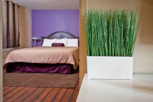 Guest Room at Alura Inn