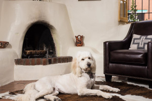 Pets welcome at Two Casitas, Santa Fe Vacation Rentals.