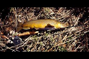Trout fishing near Rocky Mountain Elk Ranch.
