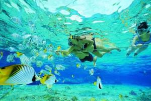 Snorkeling at Keys Holiday Rentals, Inc.