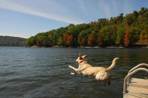 Pet friendly accommodations at Deep Creek Vacations.