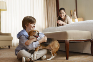 Pet friendly accommodations at Sheraton Suites Key West.