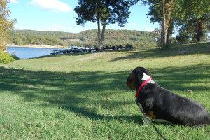 Pet friendly at White Wing Resort on Table Rock Lake.