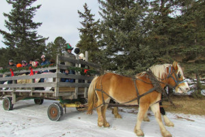 Holiday wagon ride at High Country Guest Ranch.