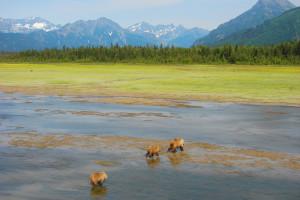 Bears at Great Alaska Adventure Lodge.
