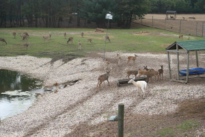 Live deer facilities at Deer Haven Acres.