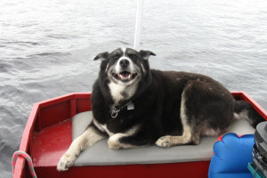 Pet friendly accommodations at Kinsey Houseboats.