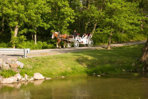 Carriage ride at Creekside Resort.